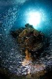 Filón y escuela de los pescados de cristal, Mar Rojo Imagen de archivo libre de regalías