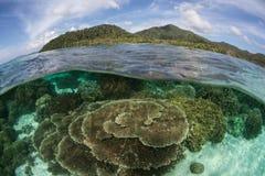 Filón y telecontrol sanos, isla tropical en Raja Ampat Fotos de archivo