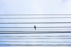 Fil d'île d'oiseau Photos libres de droits