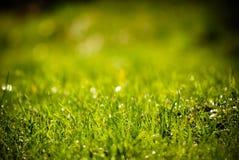 Fil d'herbe après pluie Images libres de droits