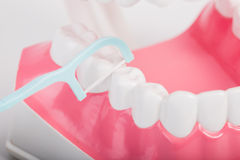 Fil dentaire Photographie stock libre de droits
