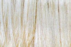 Fil en soie cru dans la ferme en soie Images stock