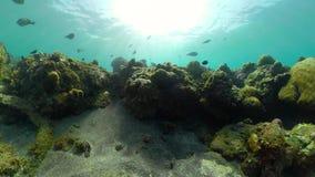 Fil?n coralino y pescados tropicales metrajes