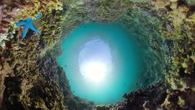 Fil?n coralino y pescados tropicales almacen de metraje de vídeo