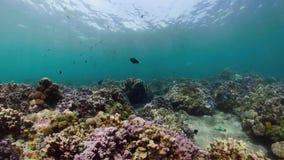 Fil?n coralino y pescados tropicales almacen de video