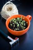 Fil rugueux, râteau et pousses vertes dans la tasse orange Atterrissage de jeune plante Image libre de droits