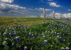 Fila azul del capo Fotografía de archivo libre de regalías