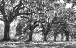 Fila de árboles Imagen de archivo libre de regalías