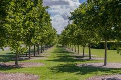 Fila de árboles Imágenes de archivo libres de regalías