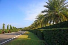 Fila de árboles con el camino foto de archivo