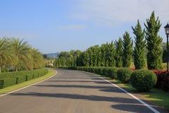 Fila de árboles con el camino fotos de archivo libres de regalías