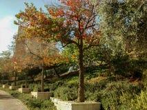 Fila de árboles con las hojas del rojo, verdes y anaranjadas, cerca de la acera, w fotos de archivo libres de regalías