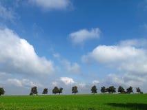 Fila de árboles contra el cielo azul con las nubes blancas Foto de archivo