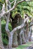 Fila de árboles en Australia Fotografía de archivo libre de regalías