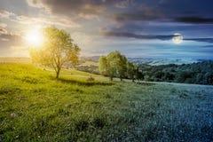 Fila de árboles en cuesta herbosa con el tiempo Foto de archivo libre de regalías