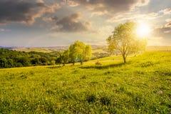 Fila de árboles en cuesta herbosa en la puesta del sol Fotos de archivo
