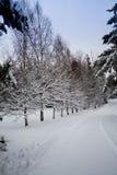Fila de árboles en invierno Fotografía de archivo libre de regalías