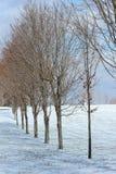 Fila de árboles en invierno Fotos de archivo libres de regalías