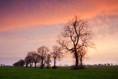 Fila de árboles en la puesta del sol Imagenes de archivo