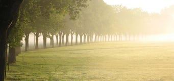 Fila de árboles en la salida del sol Imagenes de archivo
