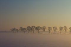 Fila de árboles en nieve, niebla y puesta del sol Fotos de archivo