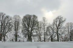Fila de árboles en un día de invierno gris nevoso Fotografía de archivo libre de regalías