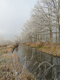 Fila de árboles a lo largo del agua en un día de invierno fotos de archivo