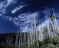 Fila de árboles muertos Fotografía de archivo