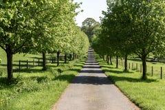 Fila de árboles verdes por el lado de un carril estrecho Imágenes de archivo libres de regalías