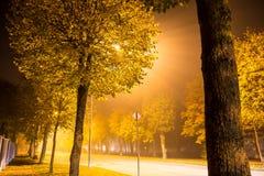 Fila de árboles y de farolas en una calle suburbana de niebla Imagenes de archivo