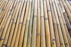 Fila de bambú Fotos de archivo libres de regalías