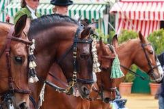 Fila de caballos excelentes en la feria del abril de Sevilla Fotografía de archivo