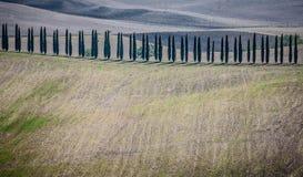 Fila de cipreses en Toscana Imagenes de archivo
