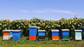 Fila de colmenas de madera coloridas con los girasoles en el fondo Fotografía de archivo
