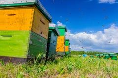 Fila de colmenas en el pasto, colmenar, granja de la abeja con el trajec de la mosca Fotos de archivo