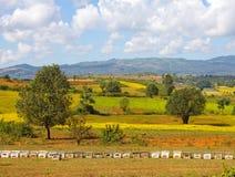Fila de colmenas en los campos agrícolas, colinas en el fondo Imagen de archivo