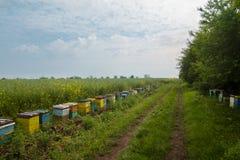 Fila de colmenas en un campo Foto de archivo