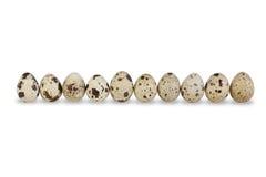 Fila de diez huevos de codornices Fotos de archivo libres de regalías
