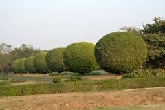 Fila de esferas arbustivas Imágenes de archivo libres de regalías
