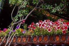 Fila de flores en potes Imagenes de archivo