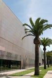 Fila de la palma de De Young Museum Imagen de archivo libre de regalías