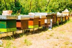 Fila de las cajas del colmenar con las abejas en la naturaleza Imagen de archivo