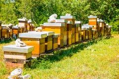Fila de las cajas del colmenar con las abejas en la naturaleza Imagenes de archivo