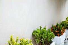 Fila de las camas de flor con los pequeños arbustos verdes y la pared blanca landscaping Foto de archivo libre de regalías
