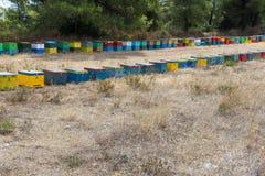 Fila de las colmenas coloridas de la abeja con los árboles en el fondo Colmenas de la abeja al lado de un bosque del pino en vera Imagen de archivo