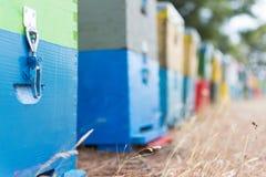 Fila de las colmenas coloridas de la abeja con los árboles en el fondo Colmenas de la abeja al lado de un bosque del pino en vera Imágenes de archivo libres de regalías