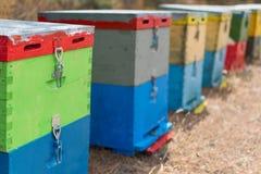Fila de las colmenas coloridas de la abeja con los árboles en el fondo Colmenas de la abeja al lado de un bosque del pino en vera Fotos de archivo libres de regalías