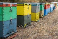 Fila de las colmenas coloridas de la abeja con los árboles en el fondo Colmenas de la abeja al lado de un bosque del pino en vera Fotografía de archivo libre de regalías