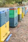 Fila de las colmenas coloridas de la abeja con los árboles en el fondo Colmenas de la abeja al lado de un bosque del pino en vera Imagen de archivo libre de regalías