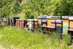 Fila de las colmenas de la abeja en el jardín Foto de archivo libre de regalías